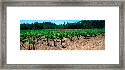Vineyards And Red Poppies In Summer Framed Print by Panoramic Images
