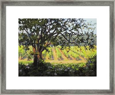 Vineyards Edge Framed Print by Karen Ilari