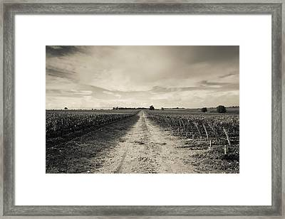 Vineyards In Autumn, Pauillac, Haut Framed Print by Panoramic Images