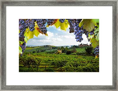 Vineyards In San Gimignano Italy Framed Print by Susan Schmitz