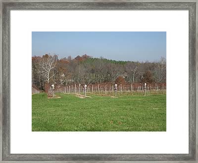 Vineyards In Va - 121228 Framed Print by DC Photographer