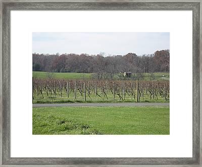 Vineyards In Va - 121234 Framed Print by DC Photographer