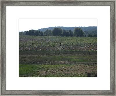 Vineyards In Va - 121255 Framed Print by DC Photographer