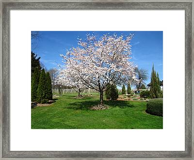 Vineyards In Va - 121268 Framed Print by DC Photographer