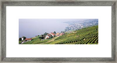 Vineyards, Lausanne, Lake Geneva Framed Print by Panoramic Images