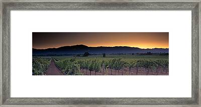 Vineyards On A Landscape, Napa Valley Framed Print by Panoramic Images