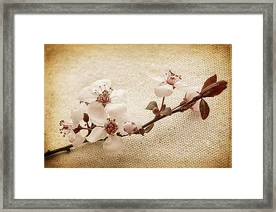Vintage Blossoms Framed Print by Caitlyn  Grasso