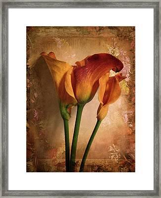 Vintage Calla Lily Framed Print by Jessica Jenney