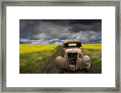 Vintage Chevy Pickup On A Dirt Path Through A Canola Field Framed Print by Randall Nyhof