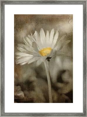Vintage Daisy Framed Print by Joann Vitali