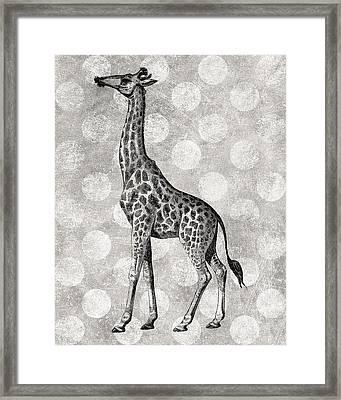 Gray Giraffe Framed Print by Flo Karp