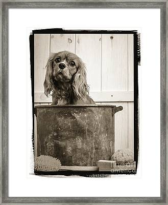 Vintage Puppy Bath Framed Print by Edward Fielding