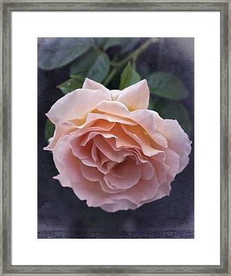 Vintage Rose No. 5 Framed Print by Richard Cummings