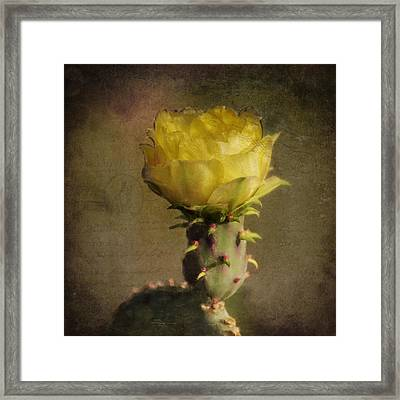 Vintage Yellow Cactus Framed Print by Sandra Selle Rodriguez