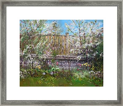 Viola's Apple And Cherry Trees Framed Print by Ylli Haruni