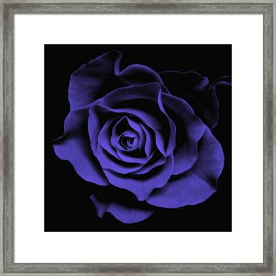 Abstract Blue Roses Flowers Art Work Photography Framed Print by Artecco Fine Art Photography