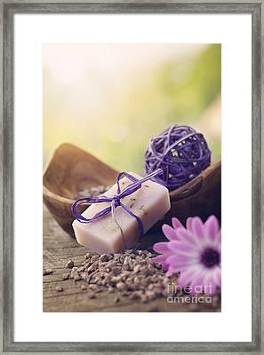 Violet Dayspa Nature Set Framed Print by Mythja  Photography