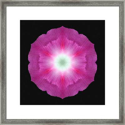 Violet Morning Glory Flower Mandala Framed Print by David J Bookbinder