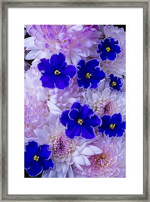 Violets And Mums Framed Print by Garry Gay