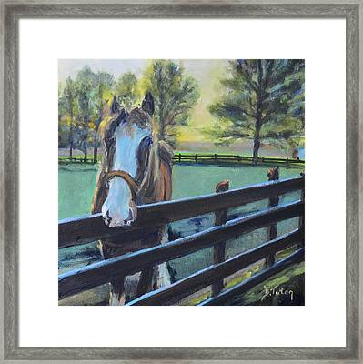 Virginia Horse Farm Morning Framed Print by Donna Tuten