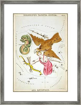 Delphinus Sagitta Aquila Antinous Framed Print by Celestial Images