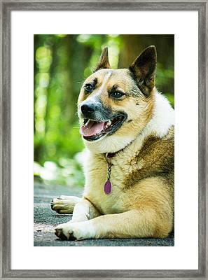 Visiting Dog Framed Print by Gabrielle Harrison