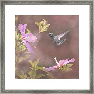 Visitor In The Rose Of Sharon Framed Print by Angie Vogel