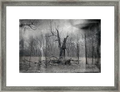 Visitor In The Woods Framed Print by Jim Shackett