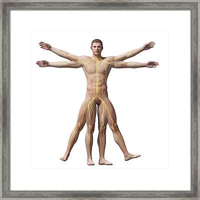 Vitruvian Man Nerves Framed Print by Sebastian Kaulitzki