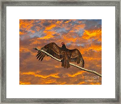 Vivid Vulture Framed Print by Al Powell Photography USA