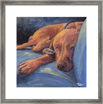 Vizsla Napping Framed Print by Terry Albert
