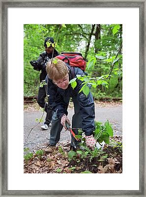 Volunteers Removing Weeds Framed Print by Jim West