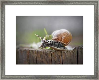 Voyage Of Discovery Framed Print by Evelina Kremsdorf