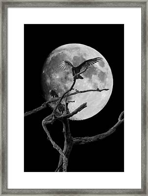 Vulture Moon Framed Print by David Lester