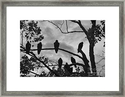 Vultures And Cloudy Sky Bw Framed Print by Dave Gordon