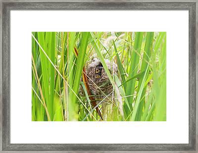 Wa, Juanita Bay Wetland, Marsh Wren Framed Print by Jamie and Judy Wild