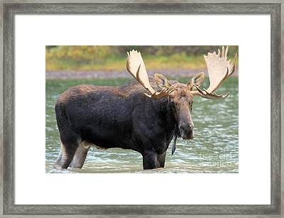 Wading At Fishercap Framed Print by Adam Jewell