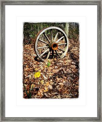 Wagon Wheel Daffodil Framed Print by Brian Wallace