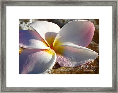 Wailea Plumeria Framed Print by Sean  James G