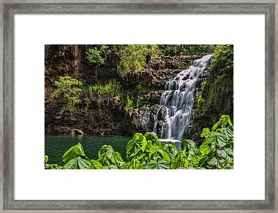 Waimea Falls Framed Print by Dan McManus