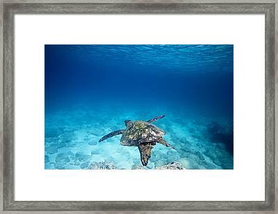 Turtle Soar Framed Print by Sean Davey