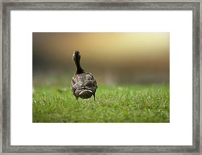 Wait For Me Framed Print by Brent L Ander