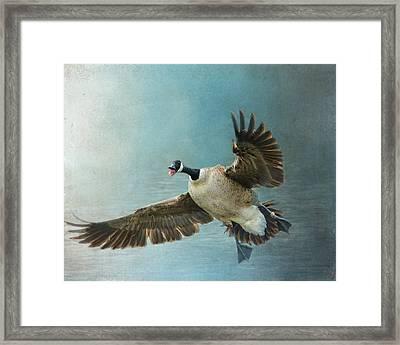Wait For Me - Wildlife - Goose In Flight Framed Print by Jai Johnson