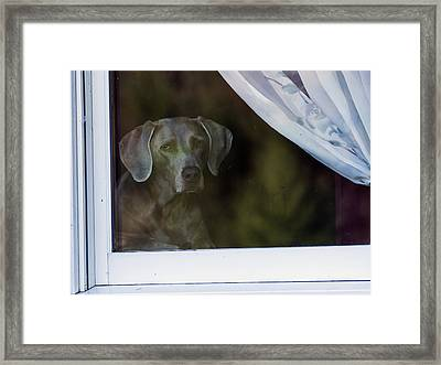 Waiting Framed Print by David Lester