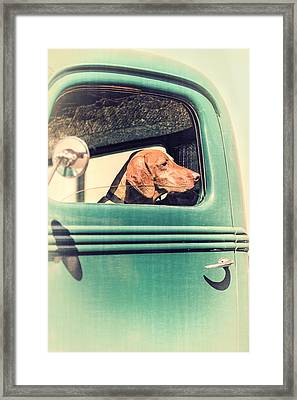Waiting For His Master Framed Print by Caitlyn  Grasso