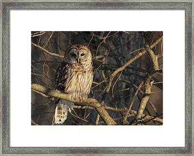 Waiting For Supper Framed Print by Lori Deiter