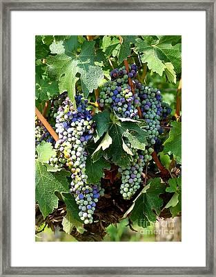 Waiting For Wine Framed Print by Carol Groenen