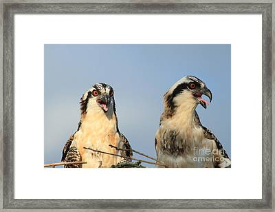 Waiting To Fly Framed Print by Geraldine DeBoer