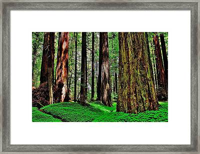Walk Among Giants Framed Print by Benjamin Yeager