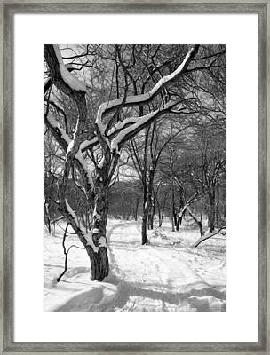Walk In The Snow Framed Print by Tracy Winter